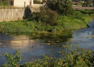 Vegetaci�n crecida en el cauce del canal del Sar.  - FOTO: C.F.