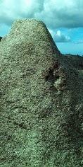 Imaxe do petroglifo descuberto estes d�as - FOTO: Asociaci�n Monte Pindo Parque Natural