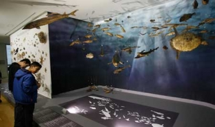 El Museo de Historia Natural de la USC, situado en el parque de Vista Alegre, abrir� oficialmente el pr�ximo martes.  - FOTO: Fernando Blanco