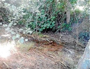 El agua volv�a poco a poco ayer al tramo del cauce seco en Outeiro, Bri�n.  - FOTO: O.V.
