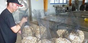 Un mariscador depositando ayer sus capturas en la lonja de A Pobra tras el control de peso - FOTO: Suso Souto