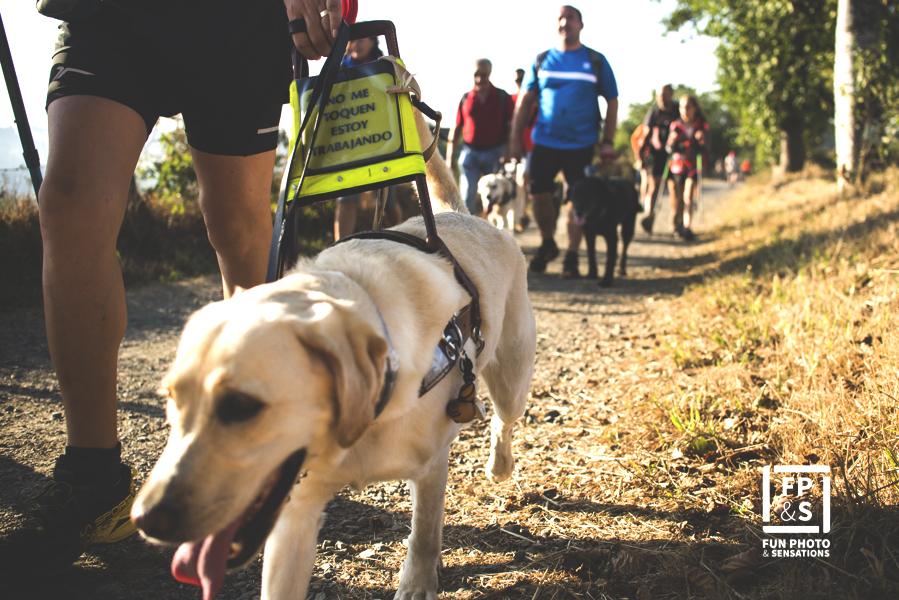 Los participantes y sus perros durante la ruta - FOTO: Fun Photo & Sensations